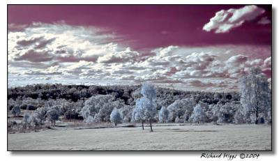 Field in Infrared